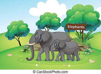 pequeno, grande, elefante