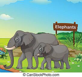 pequeno, grande, signboard, elefante