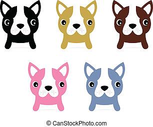 pequeno, jogo, isolado, francês, filhotes cachorro, branca,...