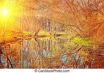 pequeno, lagoa, em, a, outono, parque, em, pôr do sol, instagram, stile