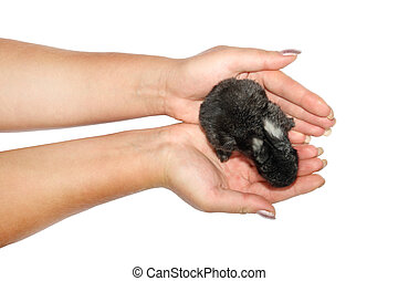 pequeno, mãos, coelhos
