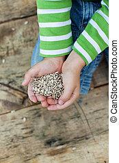 pequeno, mãos, segurando, sementes girassol