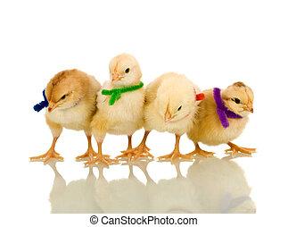 pequeno, macio, galinhas, com, coloridos, scarves, -,...