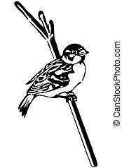 pequeno, pássaro, ramo, pardal