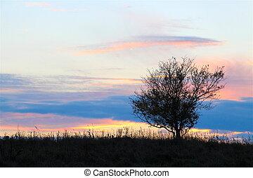 pequeno, pôr do sol, árvore, prado