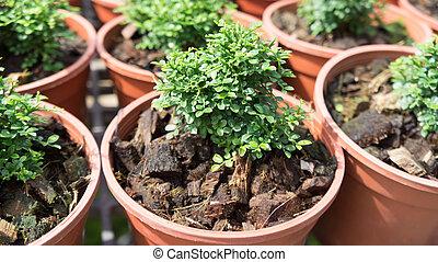 pequeno, planta, crescer