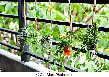pequeno, planta, decoração