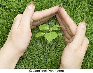 pequeno, planta, em, capim