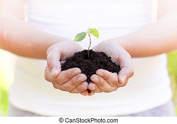 pequeno, planta, em, mãos