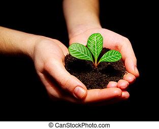 pequeno, planta verde