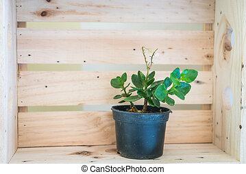 pequeno, potenciômetro planta