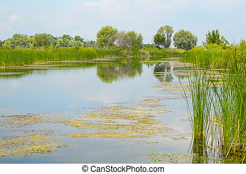 pequeno, quieto, rio, com, árvores, ligado, a, oposta, banco