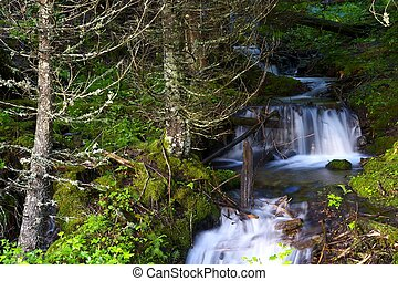 pequeno, riacho, cachoeiras