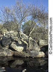 pequeno, rio, com, árvores, ligado, um, lado