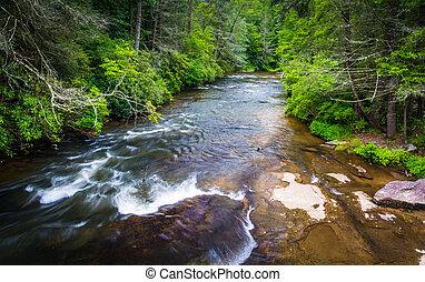 pequeno, rio, em, dupont, estado, floresta, norte, carolina.