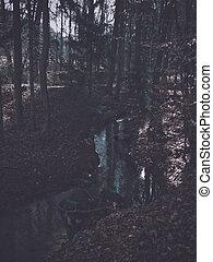 pequeno, rio, floresta