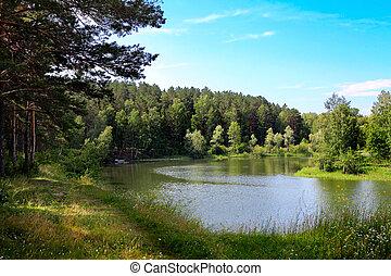 pequeno, rio, paisagem natureza