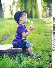 pequeno, soprando, cavalheiro, dandelions