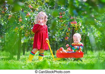 pequeno, tocando, maçã, crianças, jardim