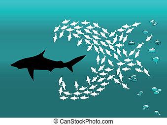 pequeno, tubarão, peixe, rebanho