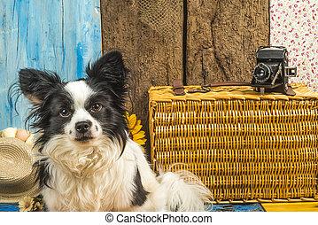 pequeno, verão, cão, feriados