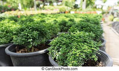 pequeno, verde, bush, árvore
