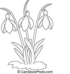 perce-neige, dessin