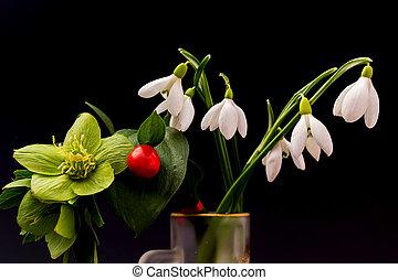 Décoration, fleurs, ellébore. Rose, ellébore, orientalis), noël, fleurs, (helleborus, ou.