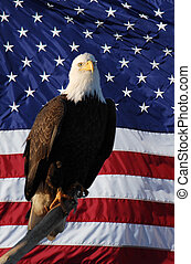 perché, aigle, drapeau américain