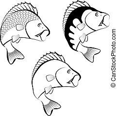 perch fish - clip art illustration