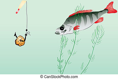 Perch fishing