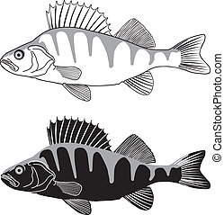 Black and white illustration Perch, isolated vector