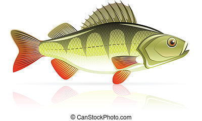 perch vector illustration isolated on white background
