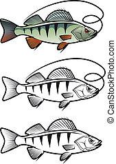 percha, pez