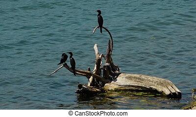 perche, arbre, mort, eau, noir, oiseaux