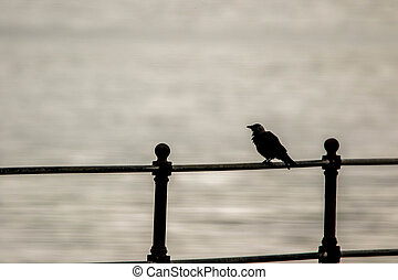 Perched - A small bird perched on sea front railings.
