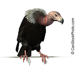 perched, borda, vulture