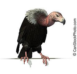 perched, borda, vulture
