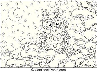 perched, nevado, abeto, coruja