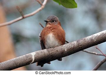 perched, pájaro