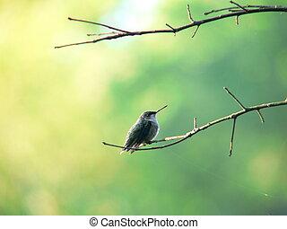 perching hummerbird 1