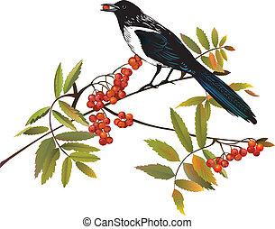 perching, oiseau, branche, pie
