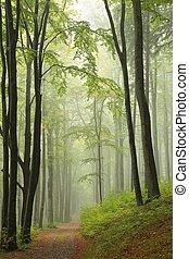 percorso, attraverso, il, autunnale, foresta