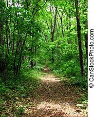 percorso, foresta
