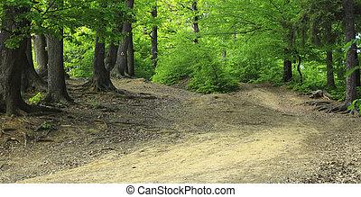 percorso, foresta verde