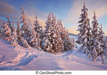 percorso, in, inverno, foresta