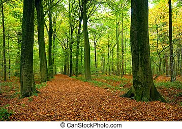 percorso, lussureggiante, foresta, attraverso