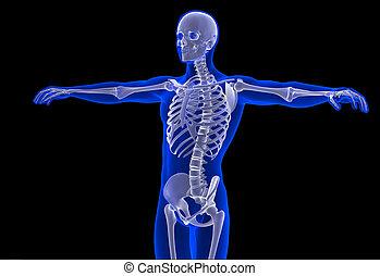 percorso, ritaglio, contiene, scheletro, man.