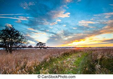 percorso, selvatico, attraverso, campagna, spirituale