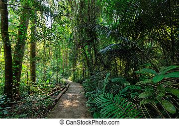 percorso, sotto, foresta pluviale